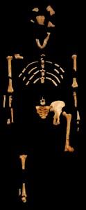 Stvarni fosil Lusi - Australopitek Afarensis