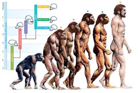 Karta navodne evolucije čoveka