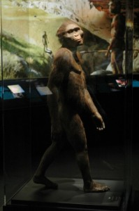 Naučna rekonstrukcija kako bi Lusi (Australopitek Afarensis) izgledala u stvarnom životu