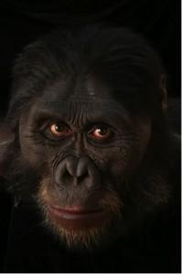 Naučna rekonstrukcija lica Australopiteka Afarensis